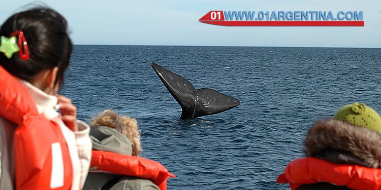 whales-patagonia-02