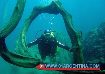 Traful Villa submerged forest