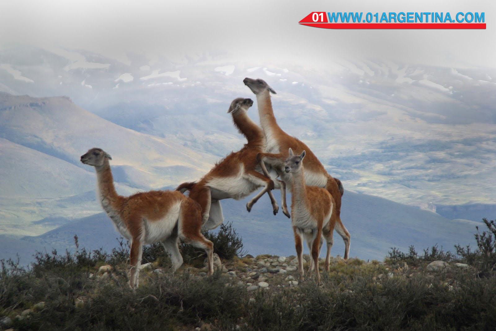 Wildlife Patagonia