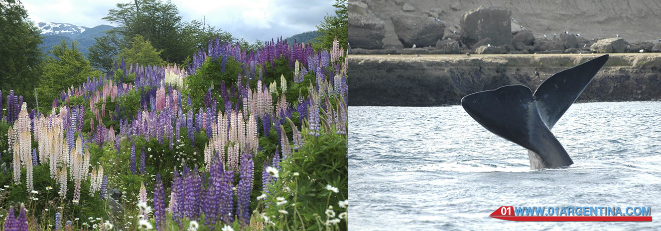 Spring in patagonia